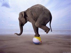 Balancing-Act-Elephant
