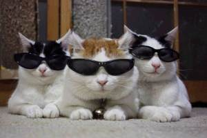 catshades