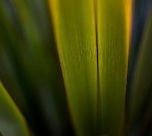 flax-web