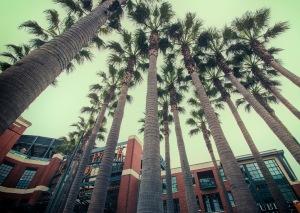 palms-web