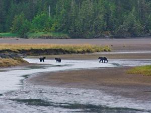bears again