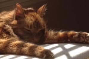 Hobbes basking in the light