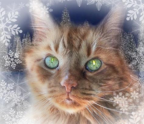 Hobbes December 2012