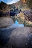 Mussels on Rocks @ Stinson Beach