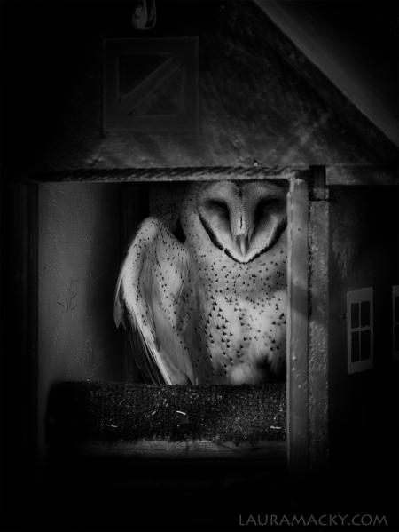 Redo of Owl