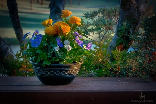 Sunlit Flowers