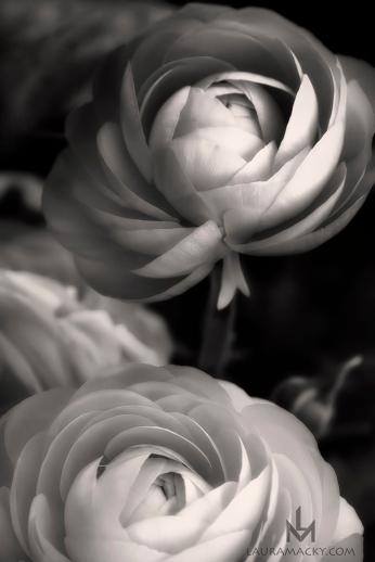 flowerrevised-web