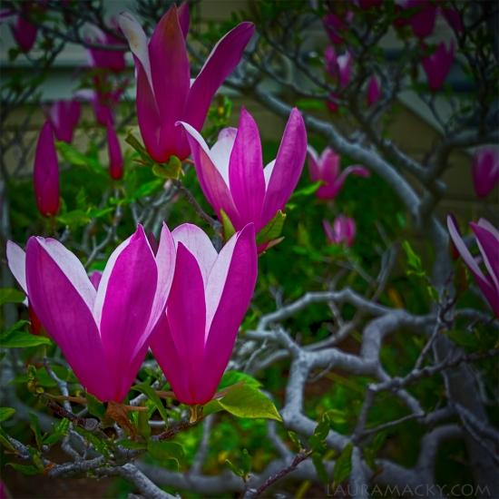 flowers-web