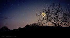 8 - Moon Rising