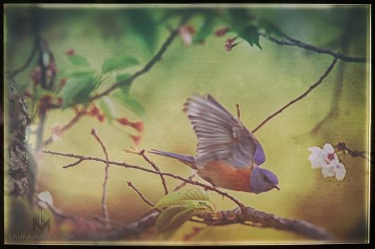 bluebird-web