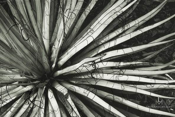 flaxbw-web