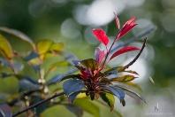 Morning Light on Leaves