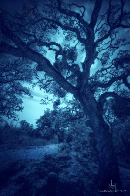 oaktree-web