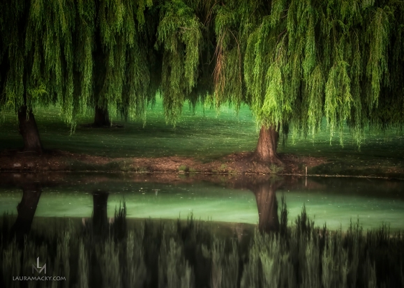 willow-web