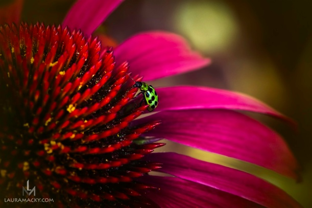 Insect on Flower Macro