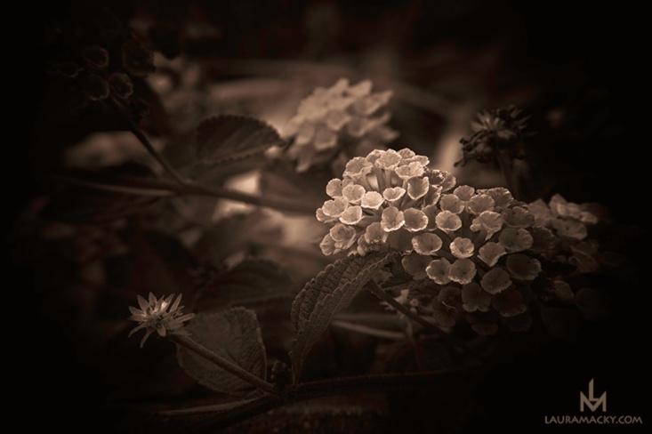 Macro of a Flower done in Monochrome