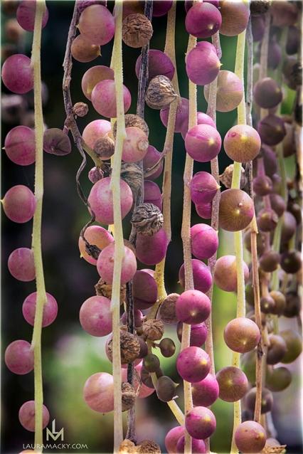 Beads of Nature
