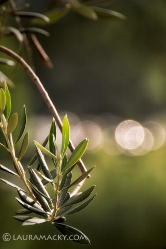 Olive Bokeh