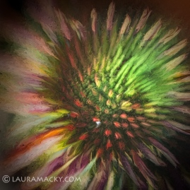 Coneflower Abstract