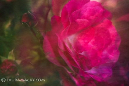 Mamma Rose