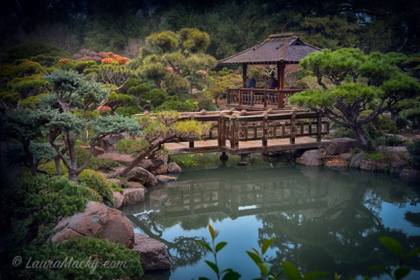 Hayward Japanese Tea Garden