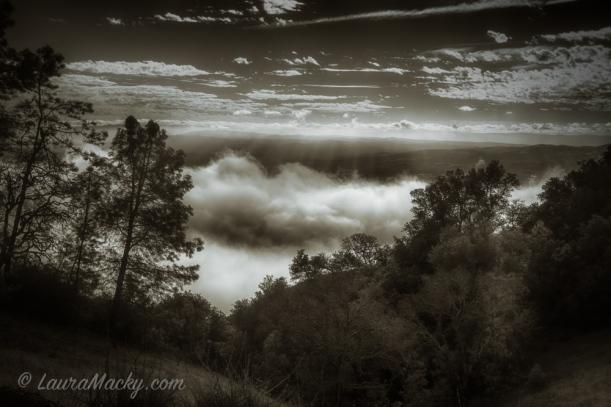 Fog Peek