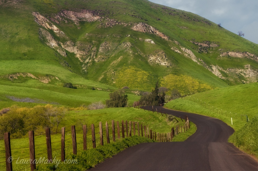 Green Hills of the East Bay