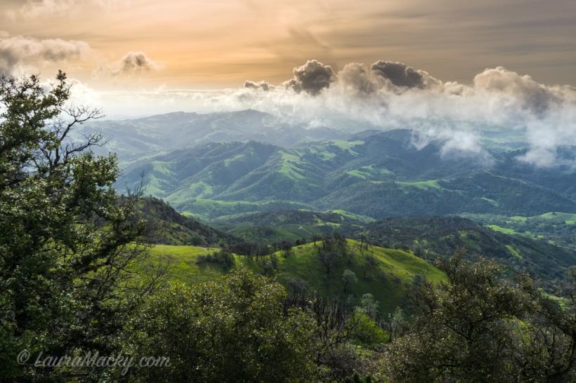 Morning Velvet on Mt. Diablo