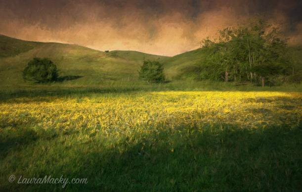 Mustard Grass @ Garin Park