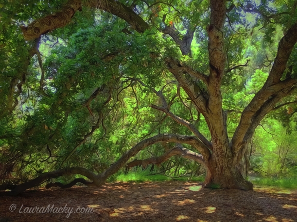 Under an Oak - Sunol Regional Wilderness