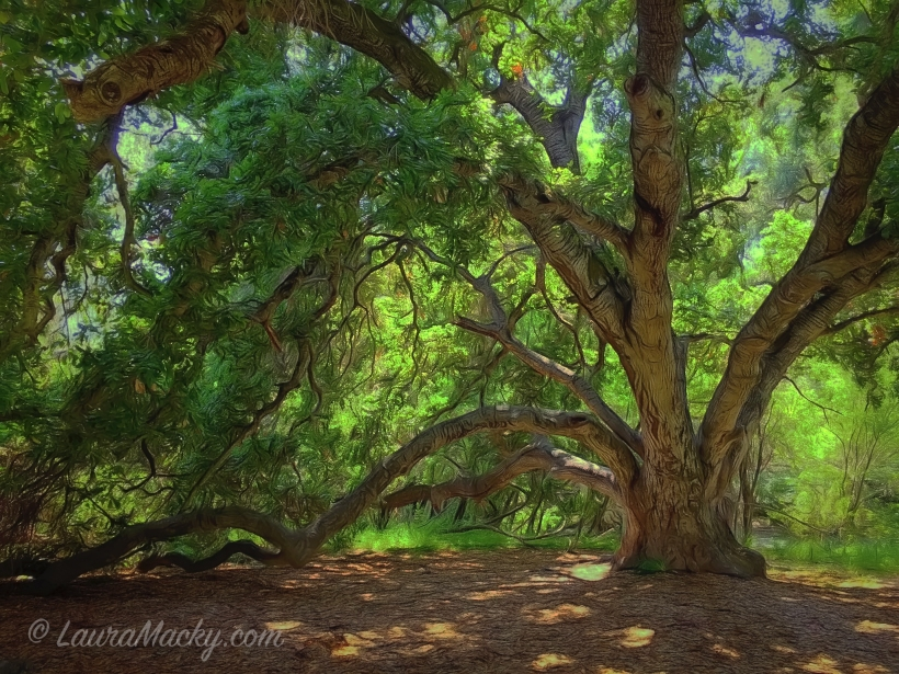 Under an Oak - Sunol Regional Wilderness