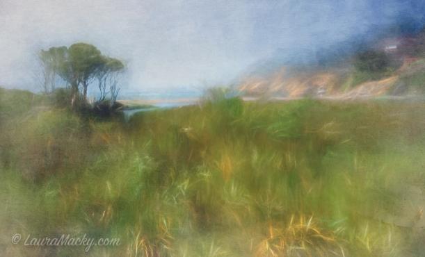 Coastal in California - Muir Beach